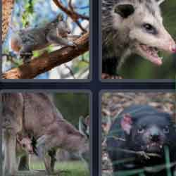 4 pics 1 word wild animal
