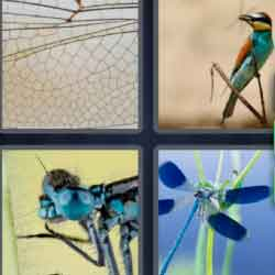4 pics 1 word 9 letters answers easy search updated answer dragonfly answer automatic 4 pics 1 word expocarfo Choice Image