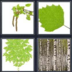 4-pics-1-word-birch