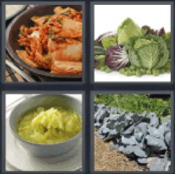 4-pics-1-word-cabbage