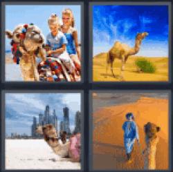 4-pics-1-word-camel
