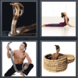 4-pics-1-word-cobra