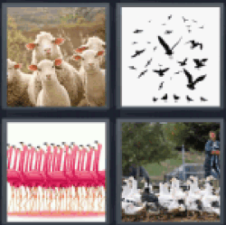 4-pics-1-word-flock