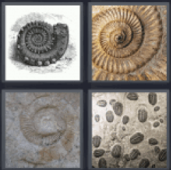 4-pics-1-word-fossil