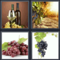 4-pics-1-word-grape