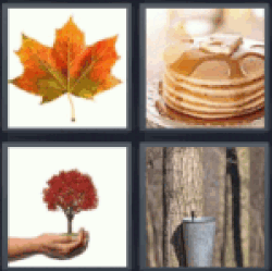 4-pics-1-word-maple