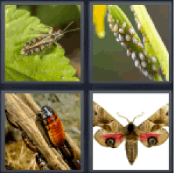 4-pics-1-word-pests