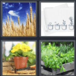 4-pics-1-word-plants