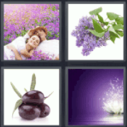 4-pics-1-word-purple