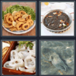 4-pics-1-word-squid