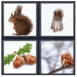 4-pics-1-word-squirrel