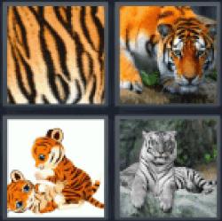 4-pics-1-word-tiger