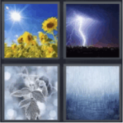 4 pics 1 word sunflower field