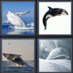 4-pics-1-word-whale