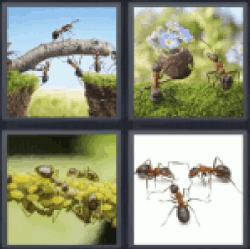 4-pics-1-word-ants