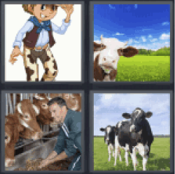 4 Pics 1 Word cattle