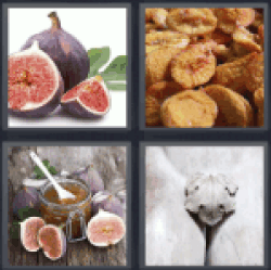 4-pics-1-word-fig