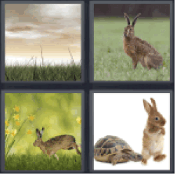 4 Pics 1 Word rabbit and a turtle