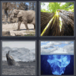 4 Pics 1 Word orca or whale. Elephant...