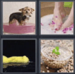 4 pics 1 word dog wash feet