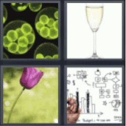 4 pics 1 word glass of champagne tulip