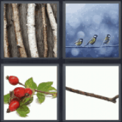 4 Pics 1 Word branches