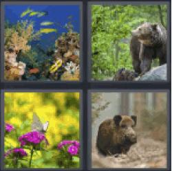 4 Pics 1 Word animals