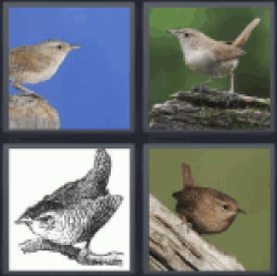 4 pics 1 word four pictures of birds